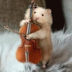 rabbit_cello